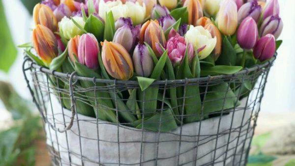AV Flowers