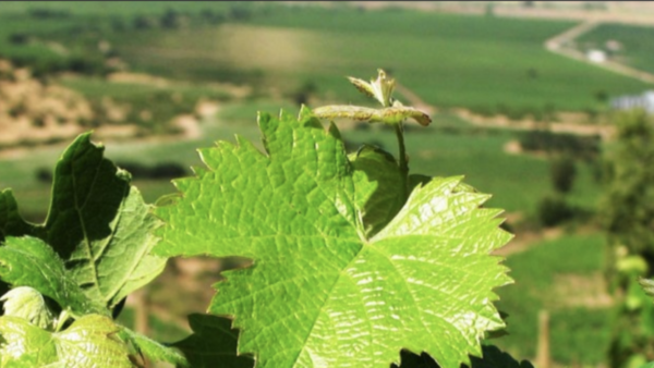 Le Petit Paradis Wijnkoperij/Slijterij